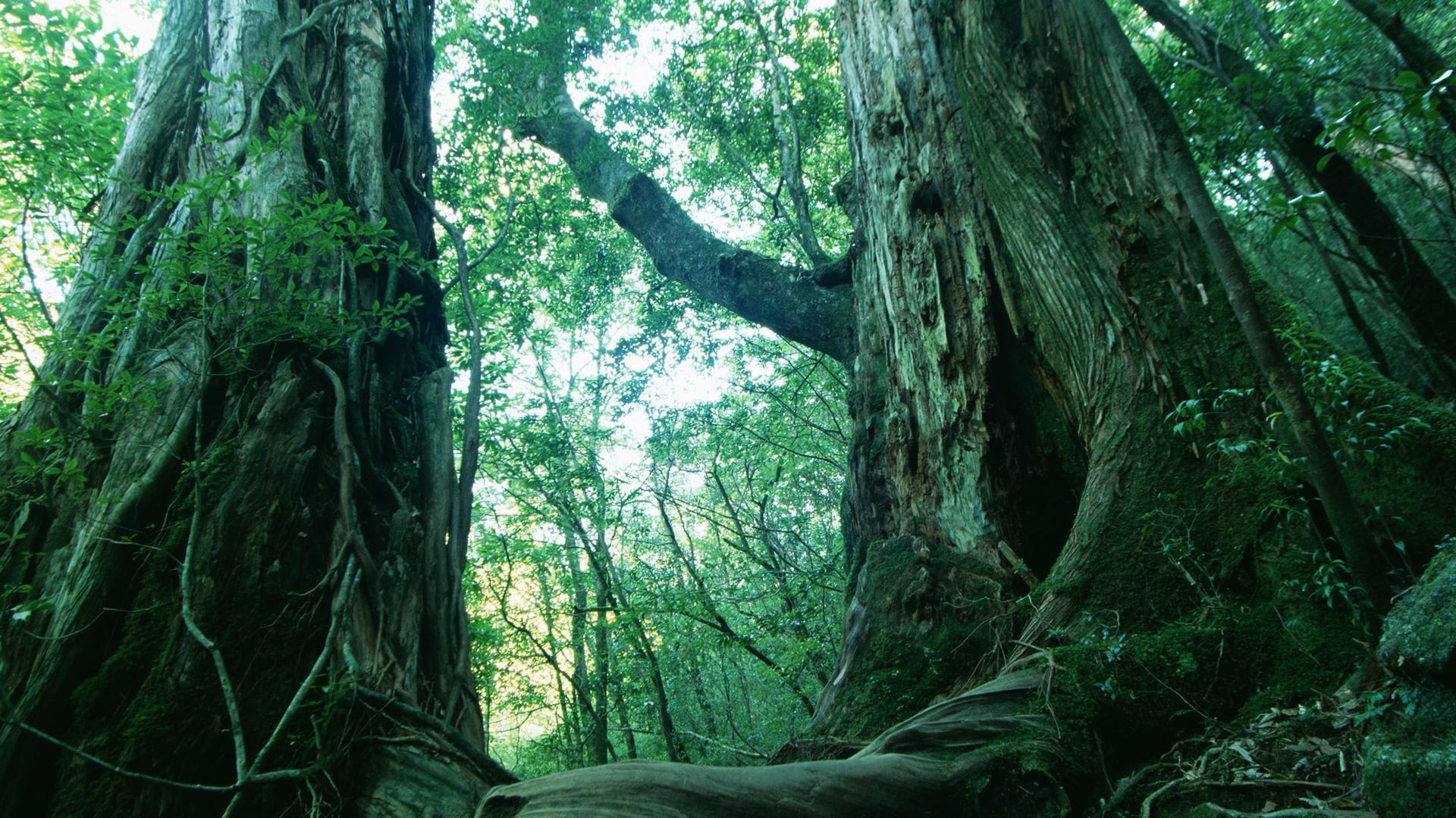壁纸 风景 森林 桌面 1920_1080