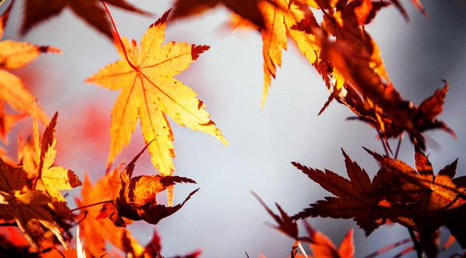描写秋天树叶掉落
