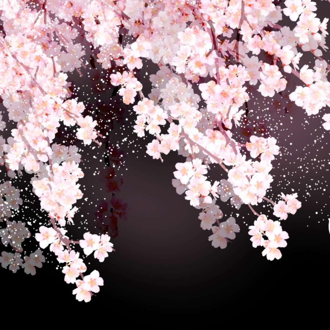 flower dance(古筝×吉他)