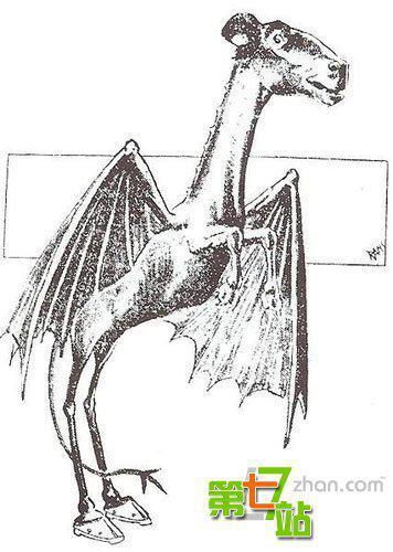 泽西恶魔是一种会飞的神秘动物
